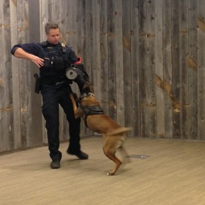 Officer Firebaugh demonstrates how a police dog is trained using the padded sleeve.